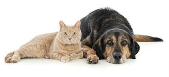 The truth is that withdrawing from. Justfoodfordogs Recommends The Best Medical Insurance For Cats And Dogs Trupanion Justfoodfordogs
