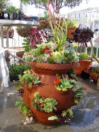 Strawberry Succulent Pot 252