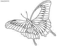 One of the most simple insect to color for your children. Butterfly Coloring Pages Page 2