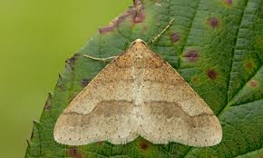 Moth Light Traps Amazon Led Strip Light For Moth Trap