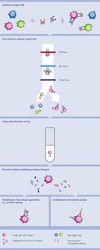 Realease Fluorochrome Technology Antibodies Macs Flow