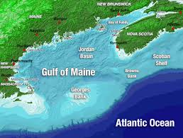 The Gulf Of Maine Gulf Of Maine Council On The Marine