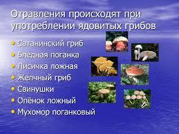 Реферат ядовитые растения первая помощь при отравлении которые при проливе или выбросе из емкости в реферат ядовитые растения первая помощь при отравлении растениями окружающую среду помощь при пищевом
