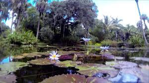mckee botanical gardens vero beach fl