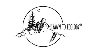 'Lost in <b>the Woods</b>' <b>Collection</b> – Drawn to Ecology