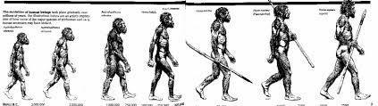Evolution Of Man Chart Creationevolution