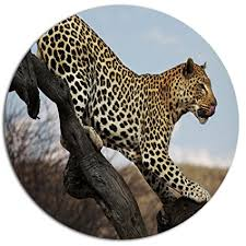 designart quot leopard walking on tree african quot metal wall art  on leopard metal wall art with amazon designart leopard walking on tree african metal wall