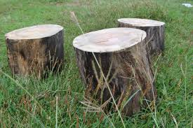 Tree Stump Seats How To Make A Stool From An Old Tree Trunk 7 Steps