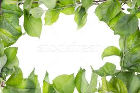 apple tree spring leaves abstract frame