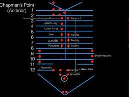 Chapmans Points Anterior For Comlex Level I