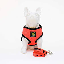 Best Harnesses For Small Dogs 2019 The Truth About This