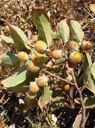 Rainforest Fruit Power U203a Nature Features ABC ScienceLotus Fruit Tree