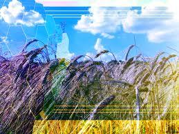 Kostenloses Bild Herunterladen Agribusiness Rye Field Tech Business