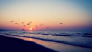 Ocean Aesthetic Sunset Background ...