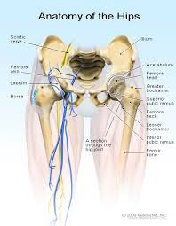The area of the tooth where the cementum meets the enamel is called the cementoenamel junction or cej for short. Hip Pain Symptoms Treatment Causes Exercises Relief