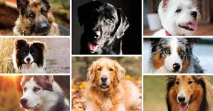most wanted dog breeds breed gallery por