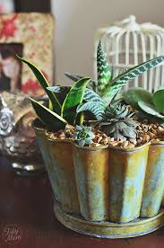 Decorating with Succulents at TidyMom