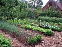 Small Picture vegetable garden ideas and designs Margarite gardens