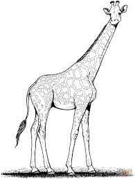 Coloring Pages Giraffes Coloring Pages Free Coloring Pages Giraffe