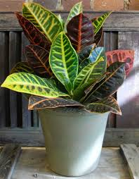 tropical office plants. Tropical Indoor Plants Office S