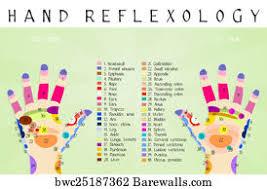 176 Reflexology Zones Posters And Art Prints Barewalls