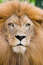 376 best Lion King images on Pinterest