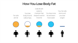 how you lose fat 1