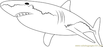 Small Picture White Shark Coloring Page Free Shark Coloring Pages