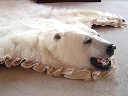 real bear skin rug real bear rugs faux polar rug fur with head real polar bear