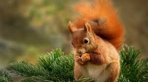 hd pictures of cute animals. Unique Pictures Squirrel Cute Animals HD Wallpaper With Hd Pictures Of N