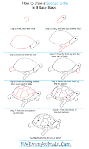 Small Picture How to Draw a Spotted Turtle