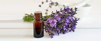 17 Benefits of Lavender Oil; It's Not Just For Perfume Anymore