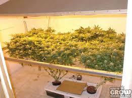 grow indoors scog