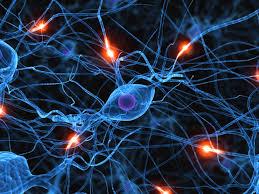 Картинки по запросу Исследование состояния нервной системы