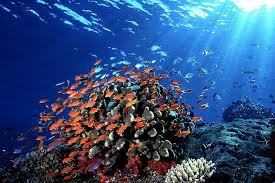 Bold And Beautiful Fiji Reef Fish What Can I See Scuba Diving