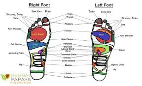 Left Foot Organ Chart Foot Reflexology 15 Amazing Pressure Points On Your Feet