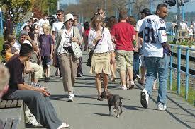 Dogs-on-promenade question spurs debate – Surrey Now-Leader