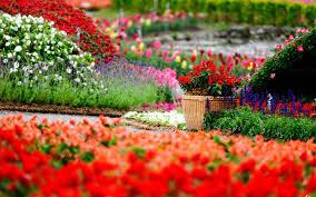 color garden. Flowers Park Garden Color Gardens Macro Bokeh Wallpaper | 1920x1200 84791 WallpaperUP