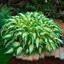 Decorative Plants For Home  Perennial Flowering Plants Landscape Decorative Plants For Home