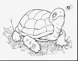Small Picture Marvelous sea turtle coloring pages with turtle coloring page