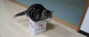 Cat-Box-Tail-Wag