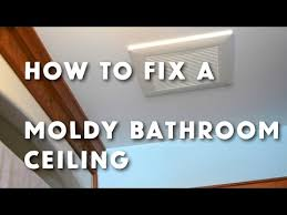 bathroom ceiling mold removal. How To Get Rid Of Bathroom Ceiling Mold - Www.stevemaxwell.ca Removal I