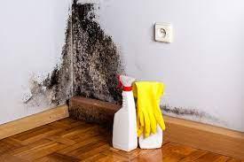 to kill mold on drywall