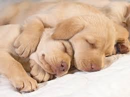 cute baby puppies sleeping. Wonderful Puppies Sleepingpuppyspooning To Cute Baby Puppies Sleeping O