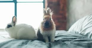 keeping indoor rabbits pdsa
