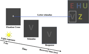 The Effect Of Blue Blocking Lenses On Photostress Recovery