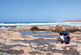 Explore The Tide Pools At Crystal Cove This Weekend