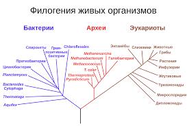 Эволюция Википедия