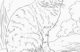 Free Cat Coloring Pages Beautiful Kitty Cat Coloring Pages Printable