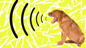 If Your Dog's Bark Suddenly Changes, It Could Be the Sign of a Health Problem – SheKnows